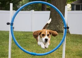 dog-through-hoop